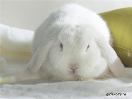 Кролик с белыми грибами
